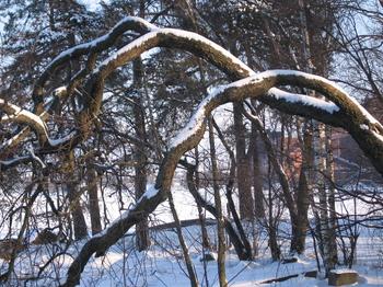 Trees2_17